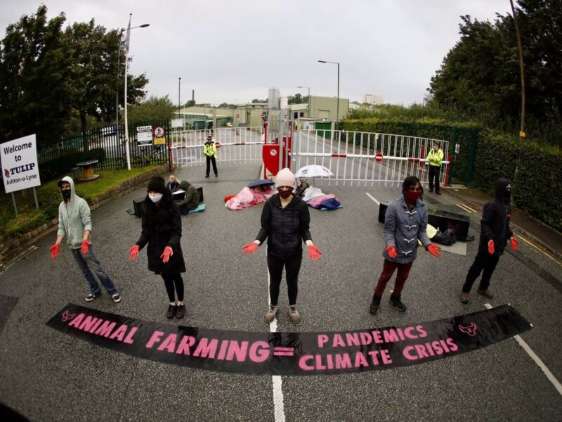 Why Animal Rebellion Shut Down a Slaughterhouse